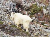 ©E. Ilene Myrass Photos Jasper Alberta